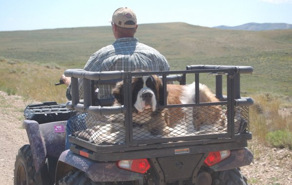 ATV Dog Carrier
