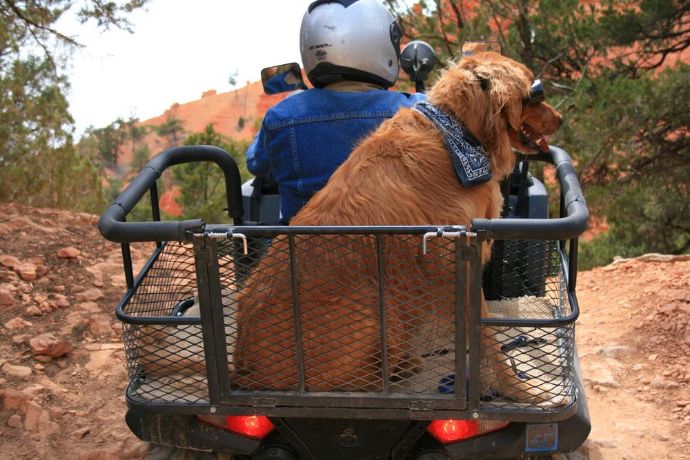 Atv Dog Carrier By Dusty Dawgs Photos