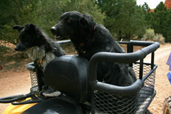Dusty Dogs ATV Dog Carrier