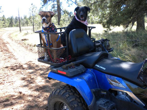 Dusty Dogs ATV Dog Box